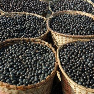 fuxion acai berries